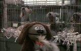 The Muppets Take Manhattan Fragmanı