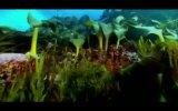 Sharkwater 2. Fragmanı